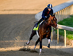 LOUISVILLE, KENTUCKY - APRIL 27: Omaha Beach, trained by Richard Mandella, exercises in preparation for the Kentucky Derby at Churchill Downs in Louisville, Kentucky on April 27, 2019. John Voorhees/Eclipse Sportswire/CSM