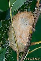 0912-0824  Oculea Silkmoth, Recently Made Cocoon, Antheraea oculea © David Kuhn/Dwight Kuhn Photography.