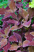 ColorBlaze&reg; Marooned&trade;<br />