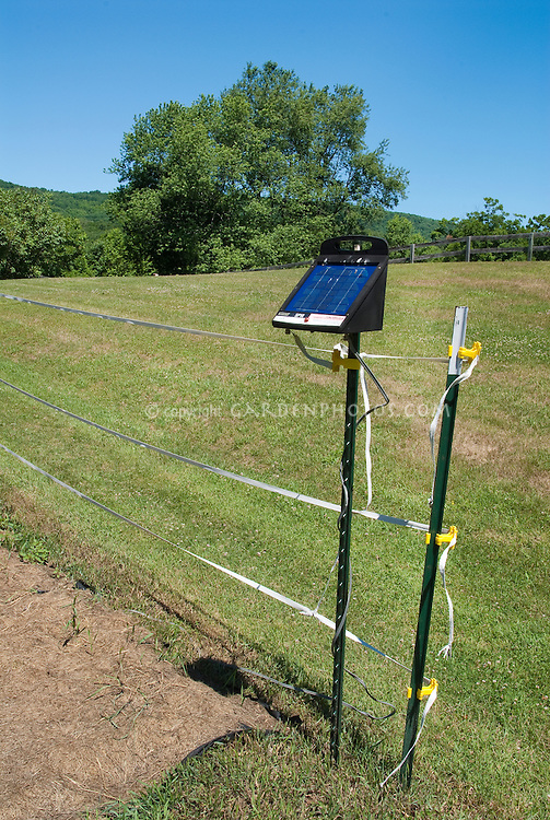 Vegetable garden deer electric fencing fence, protected, lawn grass, wide view, trees, shrubs, blue sunny sky