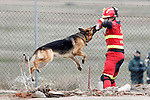 "An UME's member play with a rescue dog German Shepherd during Exercise ""GAMMA PALAZUELOS 2013"" of theMIlitary Unit of Emergency (UME).March 11 ,2013. (ALTERPHOTOS/Acero)"