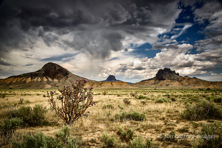 Chainfruit Chollas in bloom under a stormy sky in New Mexico's Rio Puerco Valley with Cerro Guadalupe, Cabezon Peak, and Cerro Santa Clara in the distance.