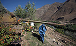 A burqua clad woman passes under the turret of a rusting soviet tank in Afghanistan's Panjsher Valley where life continues on amidst the upheavals of the recent elections and the endless war against the Taliban by the International Coalition. The scars of previous conflicts in the form of rusting , derelict Soviet tanks are a reminder that the local people do not give in easily. Posters of slain leader Ahmed Shah Massoud, the Lion of Panjsher, abound.  Massoud was the most moderate and popular of the anti-Soviet resistance leaders..Following the withdrawal of Soviet troops from Afghanistan and the subsequent collapse of the Soviet-backed government there, Massoud became Defense Minister in 1992 under former Afghan President Burhanuddin Rabbani. Following the collapse of Rabbani's government and the rise of the Taliban in 1996, Massoud returned to the role of an armed opposition leader, serving as the military commander of the United Islamic Front for the Salvation of Afghanistan..On September 9, 2001, two days prior to the September 11 attacks in the United States, Massoud was assassinated in Takhar Province of Afghanistan by suspected al-Qaeda agents.Burqua clad women walk the dusty streets in Afghanistan's Panjsher Valley where life continues on amidst the upheavals of the recent elections and the endless war against the Taliban by the International Coalition. The scars of previous conflicts in the form of rusting , derelict Soviet tanks are a reminder that the local people do not give in easily. Posters of slain leader Ahmed Shah Massoud, the Lion of Panjsher, abound.  Massoud was the most moderate and popular of the anti-Soviet resistance leaders..Following the withdrawal of Soviet troops from Afghanistan and the subsequent collapse of the Soviet-backed government there, Massoud became Defense Minister in 1992 under former Afghan President Burhanuddin Rabbani. Following the collapse of Rabbani's government and the rise of the Taliban in 1996, Massoud returned to