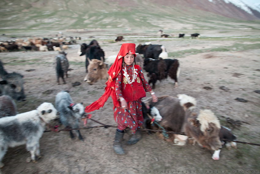 Chinor milkig the animals. Daily life at the Khan (chief) summer camp of Kara Jylga...Trekking through the high altitude plateau of the Little Pamir mountains (average 4200 meters) , where the Afghan Kyrgyz community live all year, on the borders of China, Tajikistan and Pakistan.