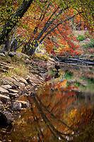 Fall leaves on Cedar Creek in Petit Jean State Park.