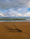 Driftwood on Anglet beach, Biarritz, Basque Country, France