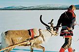 SWEDEN, Swedish Lapland, Sami Man and A Deer
