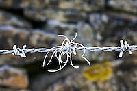 Hoar frost covered barbed wire, Oxfordshire, England, United Kingdom