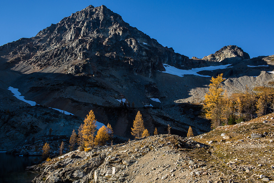 Black Peak in the North Cascade range of Washington State towers over Wing Lake and several stands of yellow western larch trees.