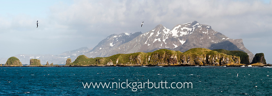 Wandering Albatross (Diomedea exulans) flying over the Bay of Isles, South Georgia, South Atlantic. (digitally stitched image)