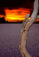 GLOBAL WARMING,ENVIRONMENT AND SAFE OUR PLANET,DEAD TREE AND LIZARD,LAST SURVIVOR