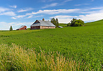 Latah County, Palouse Region, Idaho:<br /> Weathered red western style barn and rolling fields