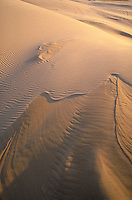 Wind-sculpted sand dunes. Oregon USA Oregon Dunes National Recreation Area.