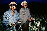 Nuristani farmers collecting opium to be transform in to heroin in the Eastern Afghanistan