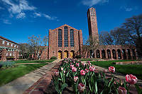 Spring tulips at the Chapel of Memories.<br />  (photo by Megan Bean / &copy; Mississippi State University)