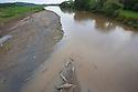 American Crocodiles {Crocodylus acutus} in the Tárcoles River, Costa Rica. May.