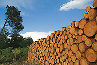 Stack of logs piled together in Landes Forest, Mano, Aquitane, France.