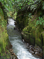 Whirinaki River flowing through Te Whaiti Nui A Toi canyon in the Central North Island of New Zealand