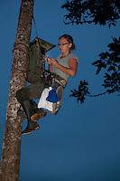 Researcher climbs to El Oro Parakeet nest box; Buenaventura Reserve; Ecuador, Prov. El Oro