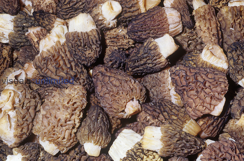 Morel Mushrooms (Morchella), commercially available all year.