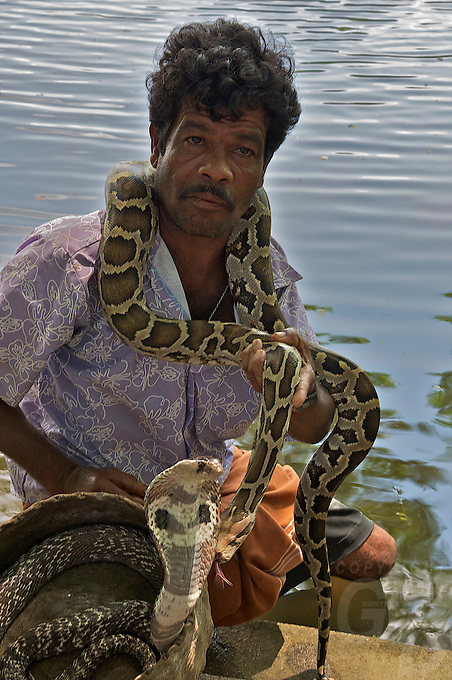 Snake handler with a Copra and Python on the Road to Dambulla Sri Lanka