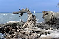 Küste bei Sassnitz im Nationalpark Jasmund auf der Insel Rügen, Mecklenburg-Vorpommern, Deutschland