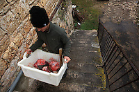 Traditional way to the pig at small village in Lozere south of France  -  Photo by Paulo Amorim