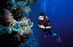 Diver looking at coral reef, Sharm el Sheikh, Red Sea, swimming with legs only, hovering, scuba, fins bubbles, blue, fish, diving.Egypt....