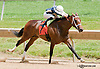 Witch Alert winning at Delaware Park on 7/10/13