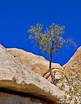 Trees between the rocks