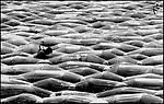 """Alsof hij zich bevindt tussen de golven van de zee, is deze werknemer van een aardbeienkwekerij in Kerkdriel, aan het werk tussen de afgedekte bedden met """"zomerkonkjes"""". Over twee weken kan hij gaan oogsten."""