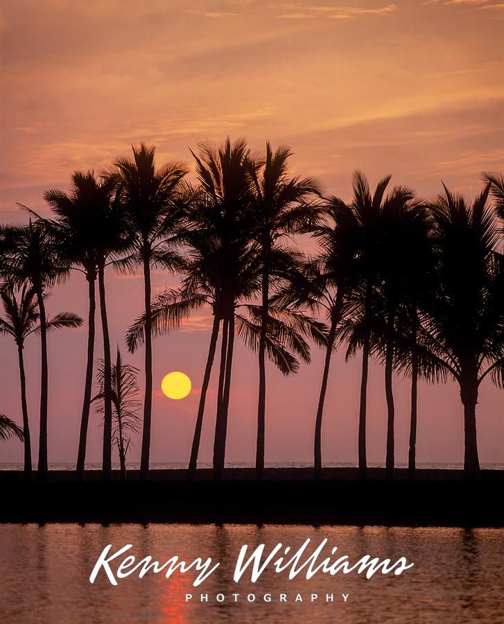 Tropical Sunset Between Coconut Palm Trees, Manoku Fishpond, Big Island, Hawaii, USA.