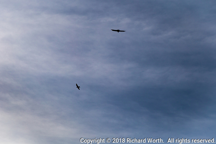 Two birds, in silhouette, against a blue sky with feathered clouds.