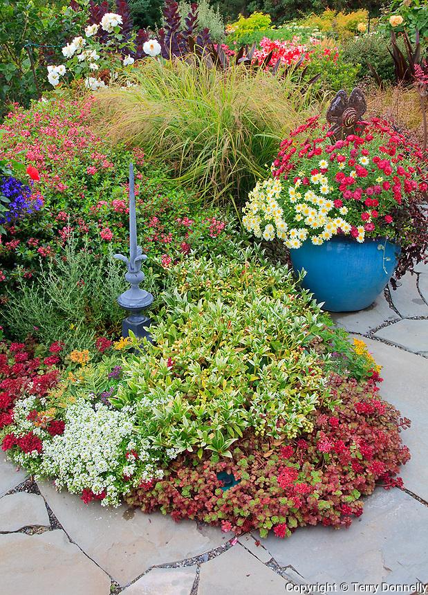 Vashon-Maury Island, WA<br /> Driscoll garden, flagstone patio bordered with colorful grasses, heuchera, sedums, and a planted blue ceramic pot