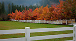Idaho, North, Idaho Panhandle, Kootenai County, Coeur d'Alene.  Vibrant colors of autumn offset by white fences and green pasture in a Fernan Meadow.