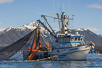 Commercial fishing vessel Hukilau participates in the first 2006 Sitka Sac Roe Herring fishery opener on the north side of Middle island in Sitka Sound, March 2006.