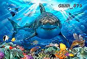 Howard, SELFIES, paintings+++++,GBHR879,#Selfies#, EVERYDAY ,sharks,maritime