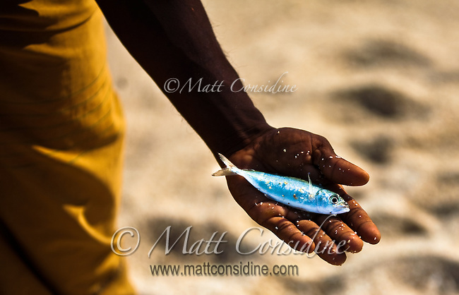 An example of the type of fish caught by stick fishermen.<br /> (Photo by Matt Considine - Images of Asia Collection)