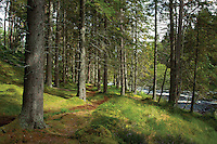 Woodland and the River Dee at the Linn of Dee, Cairngorm National Park, Aberdeenshire