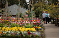 Pictured: A man and a woman enjoy the sunshine by an array of colourful tulips at the Singleton Park Botanic Garden in Swansea, south Wales, UK. Friday 06 May 2016<br /> Re: Warm and sunny weather has been forecast for most of the UK.