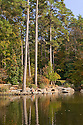 rock outcropping on the large pond in the Culberson Asiatic Arboretum <br /> <br /> fall scenes