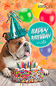 Samantha, ANIMALS, REALISTISCHE TIERE, ANIMALES REALISTICOS, funny, photos+++++Party Bulldog master,AUKP45,#a#