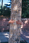 Child hiding behind tree while hugging it, Estes Park, CO