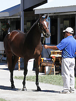 Hip #109 A.P. Indy - Lacadena filly consigned by Denali Stud at the Keeneland September Yearling Sale.  September 10, 2012.