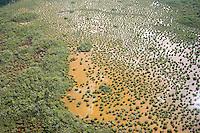 Aerial of Mangroves in salt pond Everglades National Park