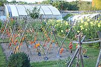 France, Indre-et-Loire, Château de la Bourdaisière, les jardins, lieu du conservatoire de la tomate // France, Indre-et-Loire, the château de la Bourdaisière, Conservatory of tomato, collection of tomatoes in the kitchen garden