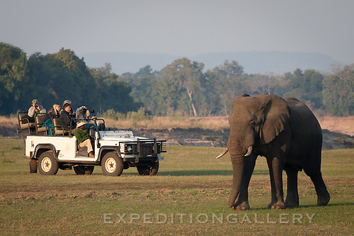 Elephant with safari vehicle in Zambia(could pass for Botswana).