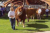 Le Festival de l'élevage et du veau de lait élevé sous la mère..Presentation des bovins de race Limousine dans le parc de la Guierle, centre-ville.