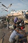Essaouira, Morocco Seagulls swoop as men gut freshly caught fish, Essaouira, Morocco