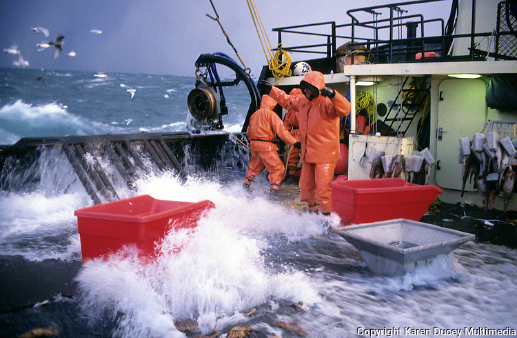 Bering sea crab fishing in stormy seas karen ducey for Seattle fishing jobs